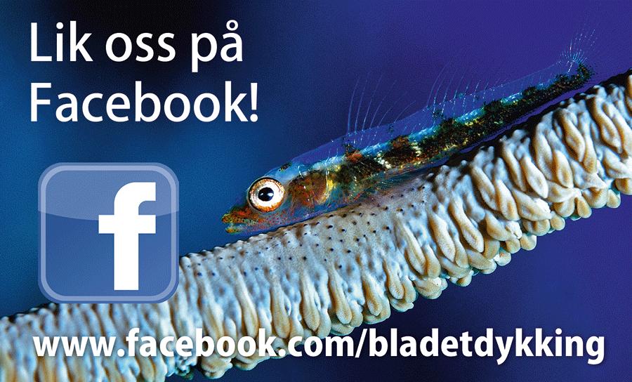 Facebook 12