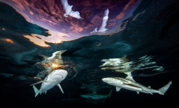 Underwater Photographer of the Year 2021